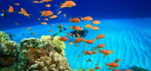 estate sharm el sheikh immersioni in mare