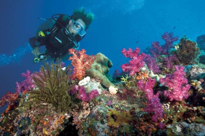 CONCORDE MOREEN BEACH RESORT & SPA | Marsa Alam
