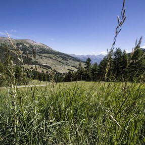 Piemonte . . . . . . . . . . . [Sestriere]