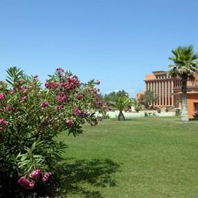 Toscana . . . . . . . . . . . . [Calambrone Tirrenia]