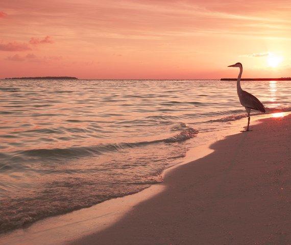 MAKUNUDU ISLAND | Atollo di Male Nord